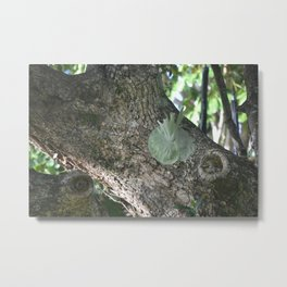 Staghorns on Old Tree in Forest Metal Print