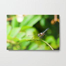 Dragonfly View Metal Print