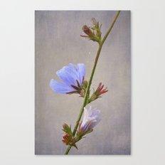 coffeeweed Canvas Print