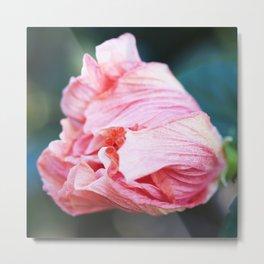 Jane Cowl Tropical Hibiscus Petals Unfurling Metal Print