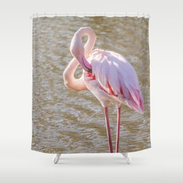 Pink Flamingo, Greater flamingo in their natural environment (Phoenicopterus roseus) Shower Curtain