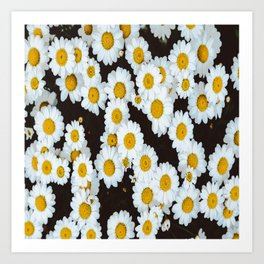 Daisy Flower Design Art Print