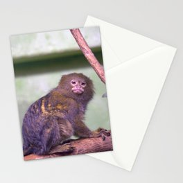 Philadelphia Zoo Series 34 Stationery Cards