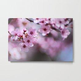 New pink spring. Pink dreams Metal Print