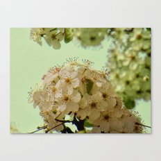 Spring Flowers on mint green background A377 Canvas Print