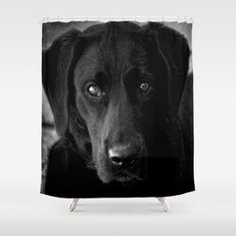 Loyalty  Black Lab  Shower Curtain