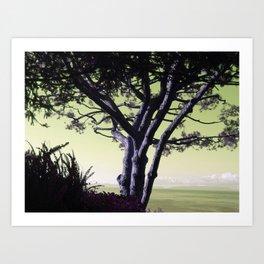 Palos Verdes tree Art Print