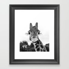 Giraffe. B+W. Framed Art Print