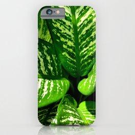 Tropic Series II iPhone Case