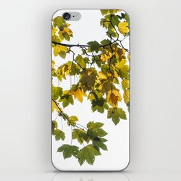 Green And Yellow Maple Leaf iPhone Skin