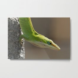 Stretching Green Anole Metal Print