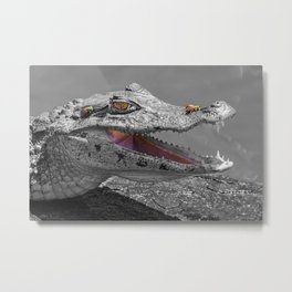 The smiling crocodile and the flies Metal Print