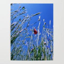 poppy flower no4 Poster