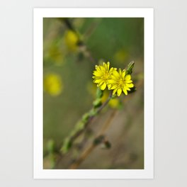 Golden flowers by the lake 3 Art Print