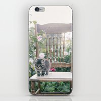 austin iPhone & iPod Skins featuring Austin by With Love & Lace...