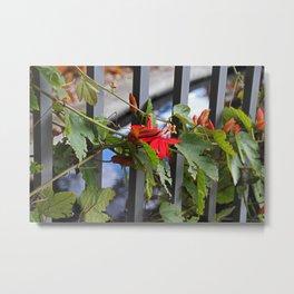 Scarlet Passion Flower Metal Print