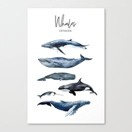 Watercolor Whales, Cetaceans, Whale Cetacea Canvas Print