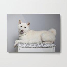 Cream Shiba Inu Dog Metal Print