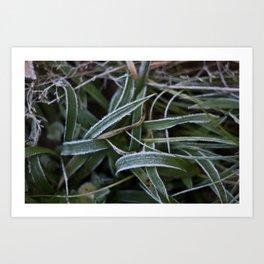 Gräs Art Print