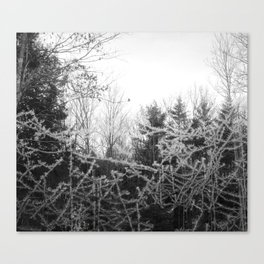 Wicked frost Canvas Print