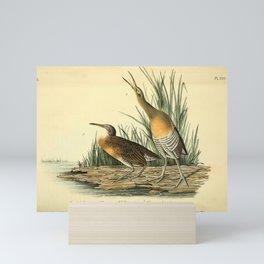Clapper Rail or Salt Water Marsh Hen9 Mini Art Print