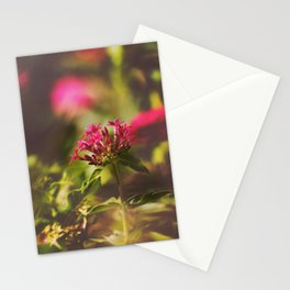 PINK PENTAS Stationery Cards