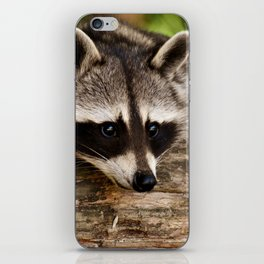 Adorable Raccoon Photo iPhone Skin