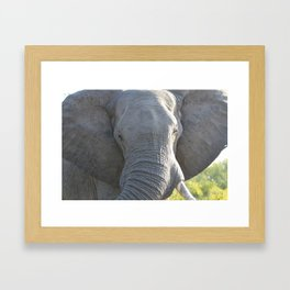Elephant Up Close and Personal Framed Art Print