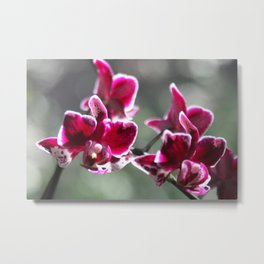 the beauty of orhid Metal Print