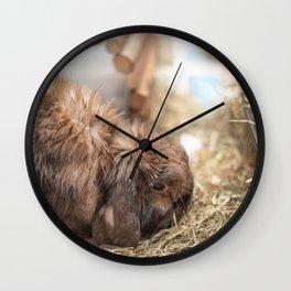 Cute lop eared bunny rabbit eating Wall Clock