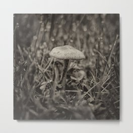 Fairyland Toadstool Metal Print
