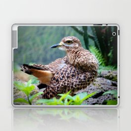 Spotted Dikkop Laptop & iPad Skin
