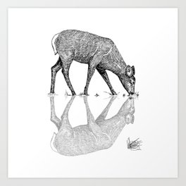 Black & White Line Work Animal Reflection Vector Art Print