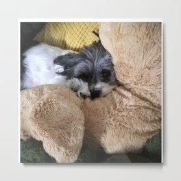 Shih Tzu Coton De Tuléar Dog Among Stuffed Animals Metal Print