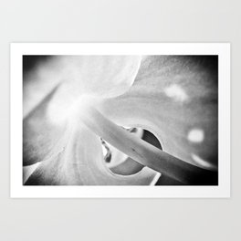 b/w Orchid Art Print