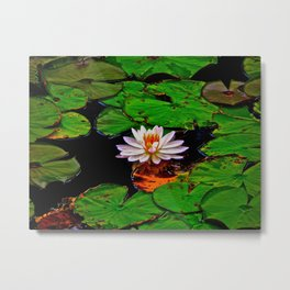 From the Lilypads Metal Print