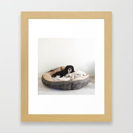 Sleepy Cavalier Framed Art Print