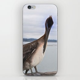 Capitola Pelican iPhone Skin