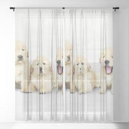 Portrait Of Golden Retriever Puppies Sheer Curtain