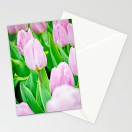 Pink tulips growing in the garden on flowerbed. Shallow depth of field. Focus on the left tulip. Stationery Cards