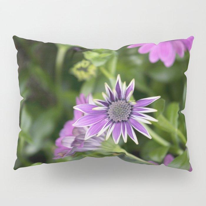 Longwood Gardens Orchid Extravaganza 39 Pillow Sham