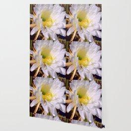 """Cactus Flower And Friend #1"" Photograph Wallpaper"