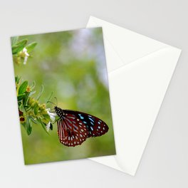 Butterfly in Thailand Stationery Cards