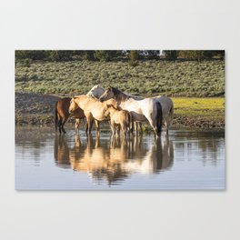 Reflection of a Mustang Family Canvas Print