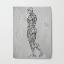 Muscle Anatomy II Metal Print