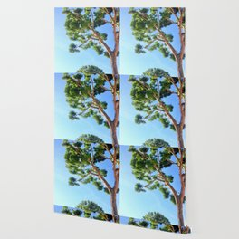 Sun Trees Wallpaper