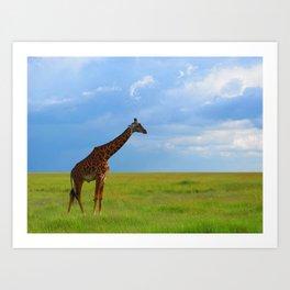 Lone giraffe Art Print