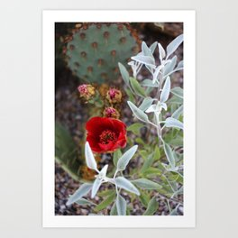 Cactus Flower Series: Red Flowers and Silver Leaves Art Print