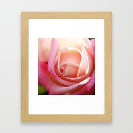 Expressive Pink Rose macro Framed Art Print