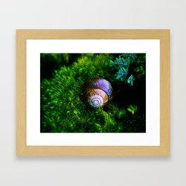 SNAIL IN THE FOREST Framed Art Print